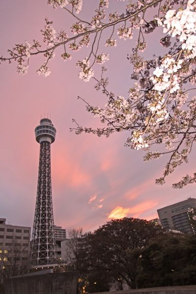 横浜マリンタワー(神奈川) Yokohama Marine Tower, Kanagawa, JapanCherries Blossoms, Yokohama Japan, Pink Sky, Yokohama Marines, Towers Japan, Kanagawa Japan, Pink Blossoms, Marines Towers, Cherry Blossoms