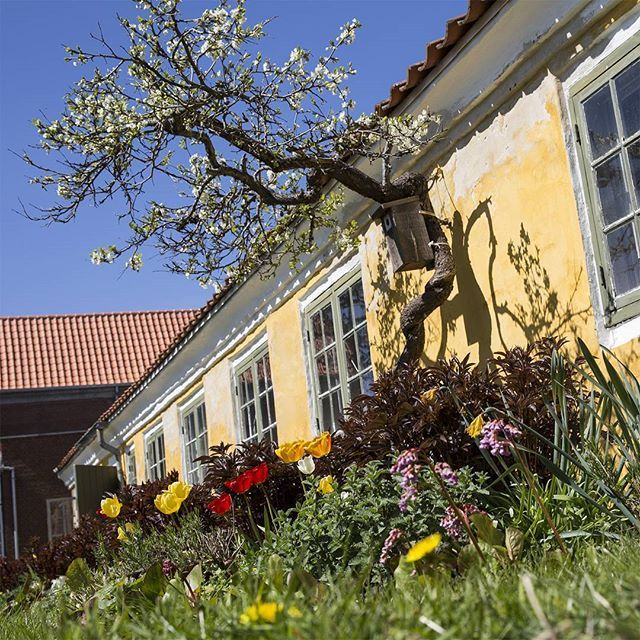 View from the museum garden. The garden house in front was once the first home of Michael and Anna Ancher right after they were married (and before they bought @anchershus). It has previously been used for smaller summer exhibitions, but today it houses our café. Happy Mother's Day 💝 #skagensmuseum