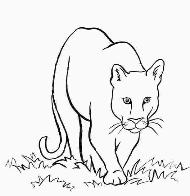 Mountain Lion Coloring Pages Lion Coloring Pages Mountain Lion