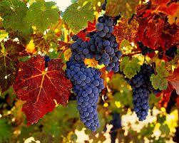 chilean wine - Buscar con Google