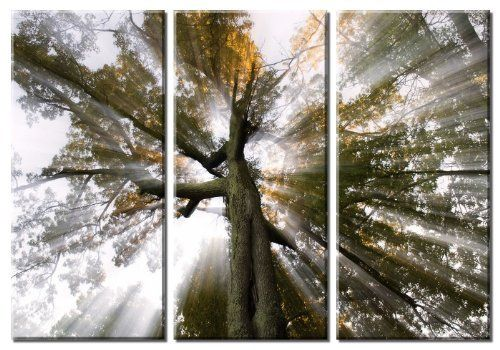 Picture Sensations Framed Huge 3-Panel Sun Tree Rays of Light Giclee Canvas Art by Picture Sensations, http://www.amazon.com/dp/B00CQGDYPE/ref=cm_sw_r_pi_dp_oN9Trb1VWRJQC