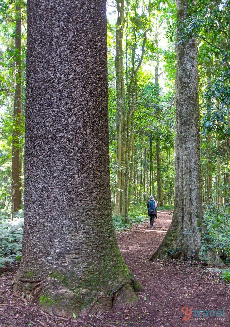 Bunya Mountains, Queensland, Australia - one of 50 top things to do in Qld, Australia