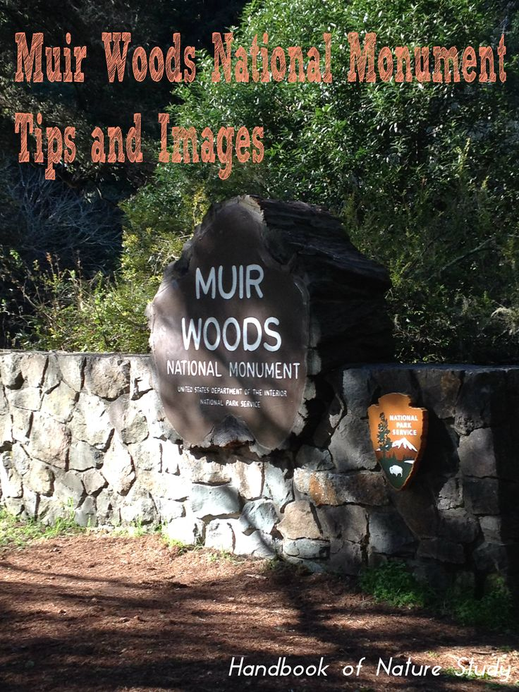 Muir Woods National Monument Tips and Images @handbookofnaturestudy