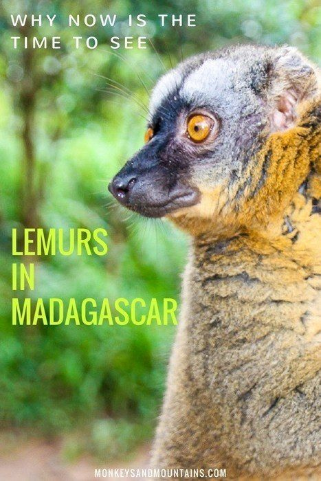 The best time to see lemurs in Madagascar is NOW. Your visit as an ecotourist can play an important role in lemur conservation - before it's too late.