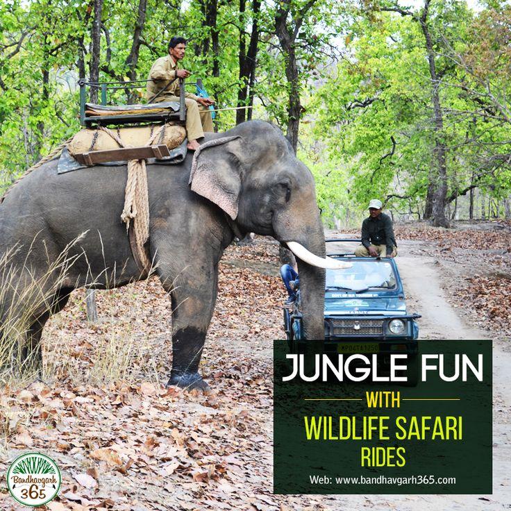 Jungle Fun With #WildlifeSafari Rides.