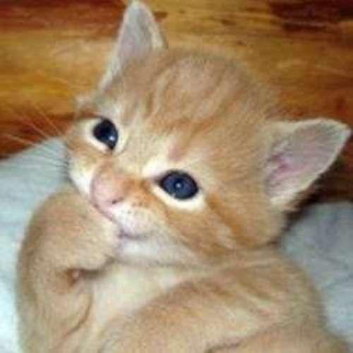 Koleksi Gambar Kucing Lucu dan Menggemaskan - http://asaljadi.com/koleksi-gambar-kucing-lucu-dan-menggemaskan/