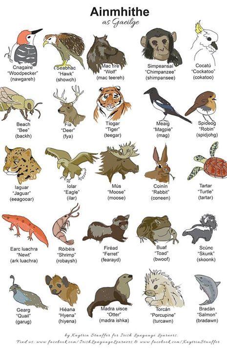 Ainmhithe (Animals)