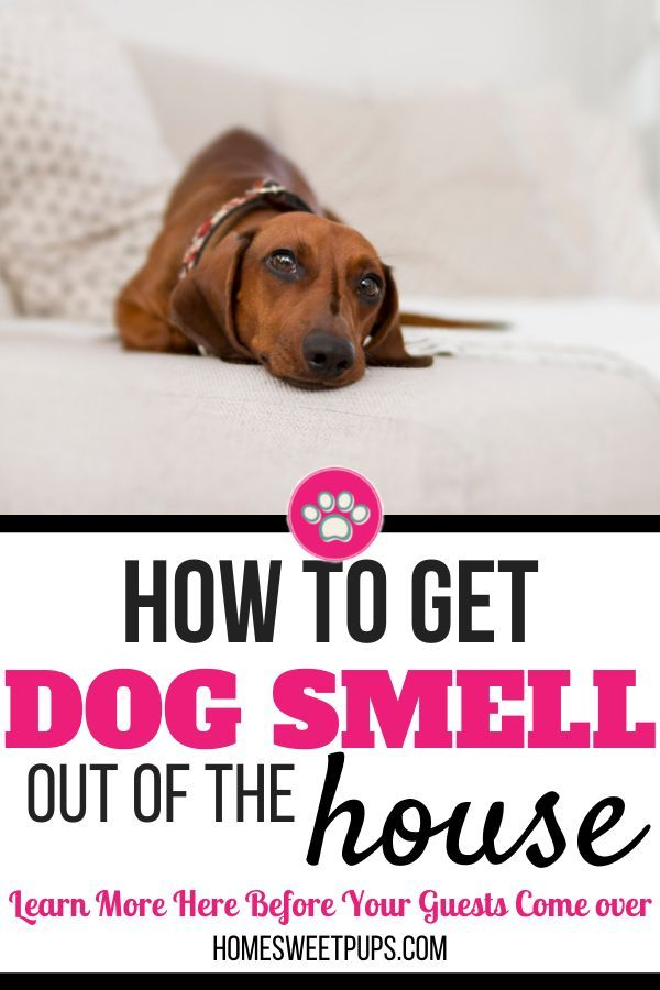 Having Guests Over And What To Know How To Get Rid Of Dog Smell