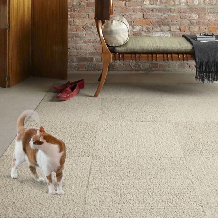 Pet Friendly Decorating Flor Carpet Tiles: 17 Best Ideas About Carpet Squares On Pinterest