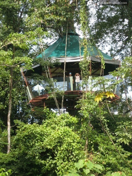 1000 images about tree houses on pinterest treehouse for Tree house costa rica