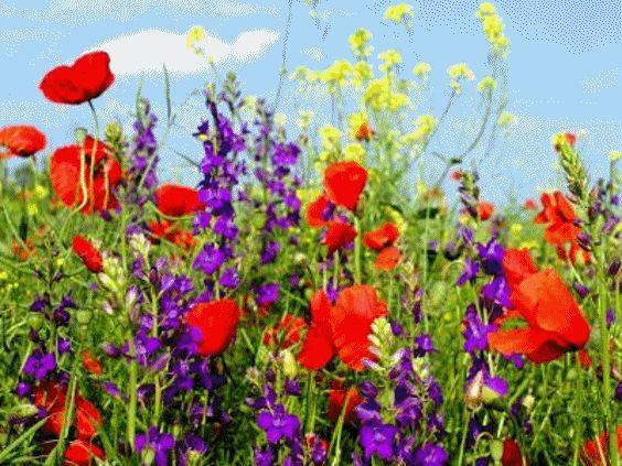 Jó éjszakát kívánok!,Örömteli, szép napot kívánok!,Csupa pipacs, - baratha Blogja - Személyes,1848. március 15.,A KaRáCSoNY,A NAP BÖLCSESSÉGE,ANYÁK NAPJA,Az igaz barátság,Barátság,Cseresznye-virágzás-ünnepe,DEBRECENI ESEMÉNYEK,Egészségünk védelme,Egy kurva naplójából -részlet,Egy utazás története 6 részben,EMLÉKEZÉS SZERETTEINKRE,Érzelmek,Ezotéria,Fák, cserjék, virágok,FARSANGRÓL SZÓLÓ,Fejős Éva idézetek,FESTMÉNYEK, FOTÓK,Húsvét,Idézetek napszakra is,Idézetes képeslapok,Internetes…