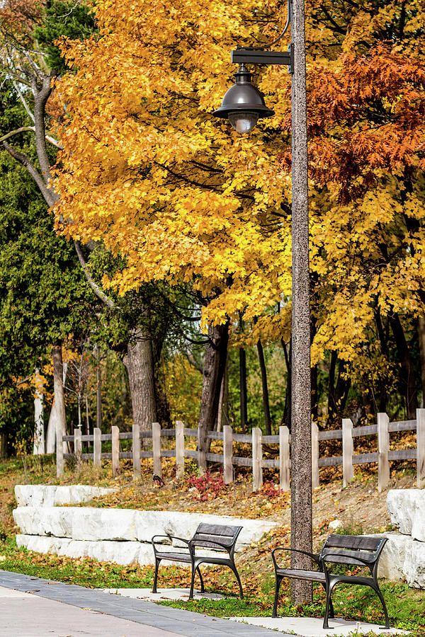 Fall Photograph - In The Park By Olga Olay by Olga Olay