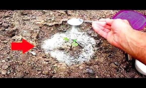 10 eszméletlen kerti praktika, ami idén nagy hasznodra lesz!