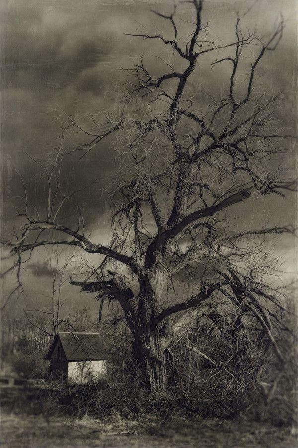 Bald Pate Tree by Kim Zier, via 500px