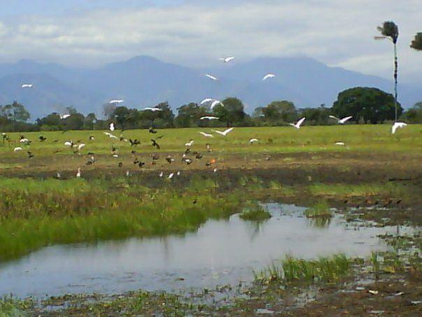 llanos orientales paisajes morichal - Buscar con Google