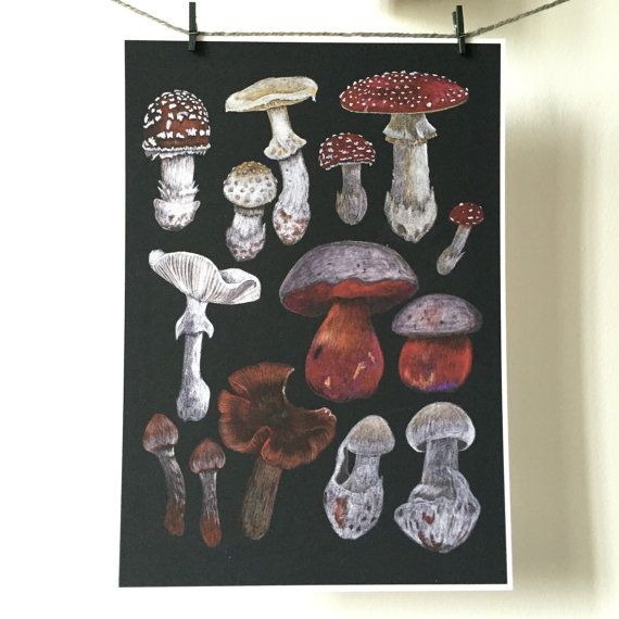 Poisonous Fungi A4 Giclee print  mushrooms by thefloralfoxart