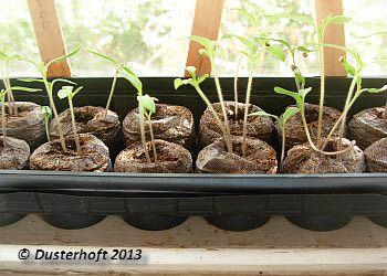 Planting guide for garden newbies - National Gardening | Examiner.com