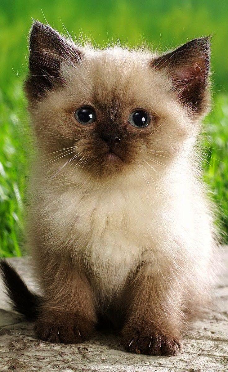 Милые картинки котята на телефон