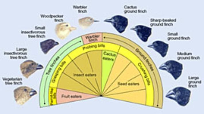 Darwin's Observation of Birds | Evolution | Social Studies, Science | Video | PBS LearningMedia