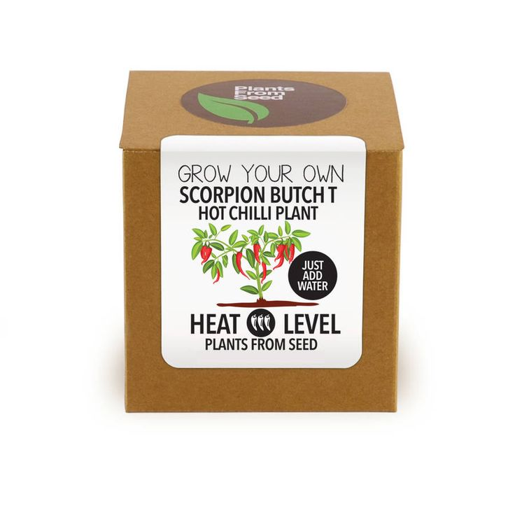 Grow Your Own Scorpion Butch T Chilli Plant. All you need to grow your own hot chilli plant at home.  The Scorpion Butch T. One of the hottest peppers know to man. It's wonderful mean look with it`s scorpion tail is most apt for this extreme chilli. The chilli has been rated at 1,463,000 Scoville Units.