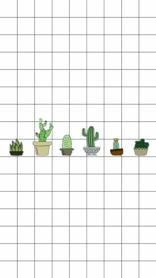 Cactus Cacto Papel de parede