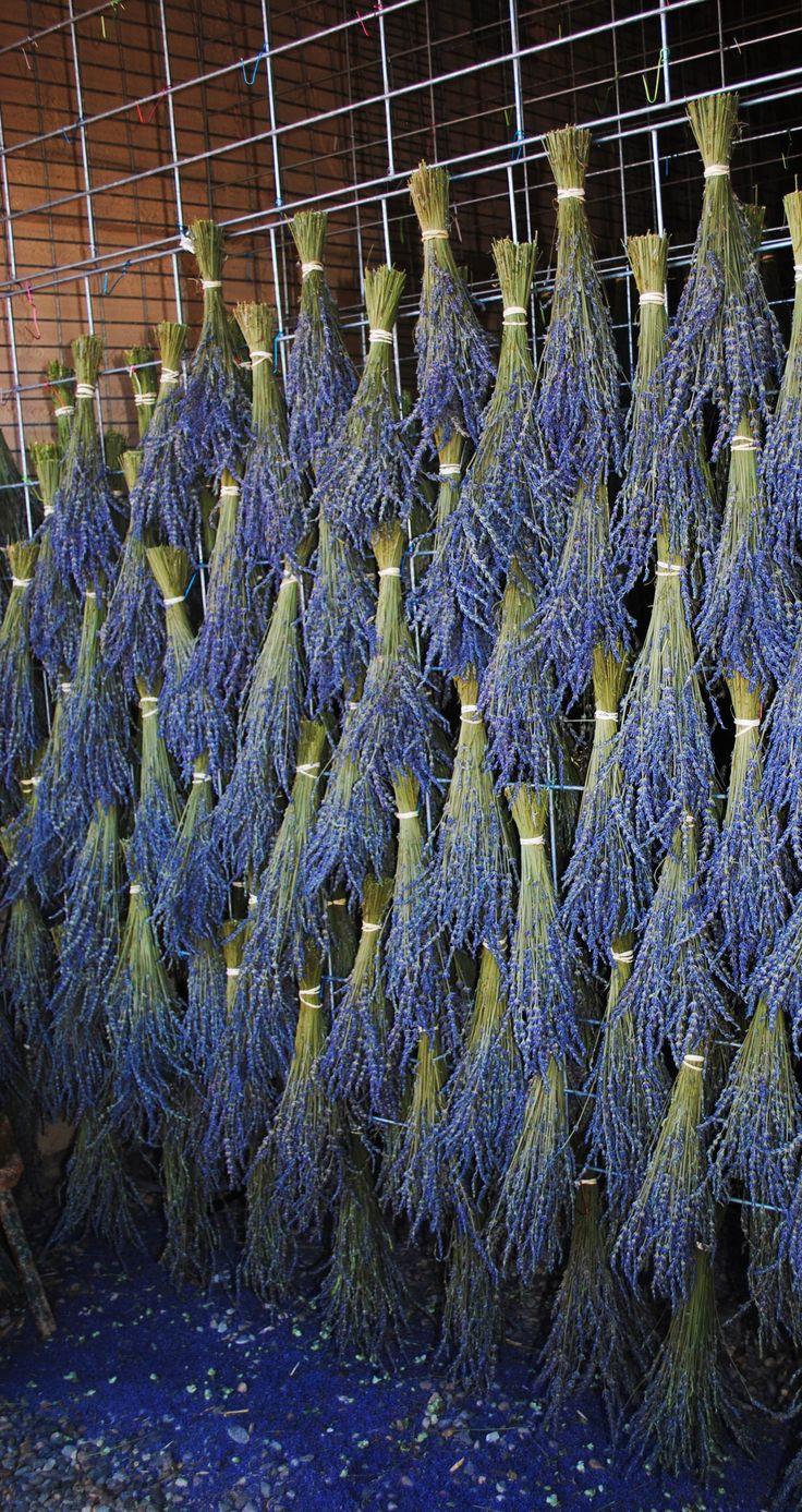 Lavender drying racks in western Colorado. Photo by Jana Magnuson