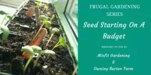 Frugal Gardening series kickoff: free seed starting containers.