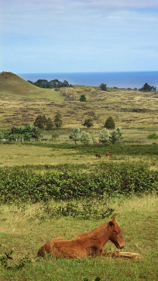 Maunga Terevaka