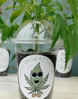 My First Grow – A Cannabis Grow Kit For Kids                                                                                                                                                                                 More