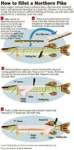 Fillet a Northern Pike                                                                                                                                                                                 More