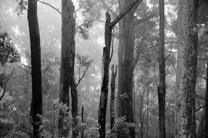 Australia www.riittasourander.com art photography