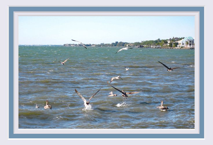 """Shorebird Print. Fine Art Photograph. 13""""x19"""". Pelicans Fishing. Premium Heavy Weight Glossy Paper. Ready for Frame. FREE shipping in US. by VintageArtForLiving on Etsy https://www.etsy.com/listing/522372907/shorebird-print-fine-art-photograph"""