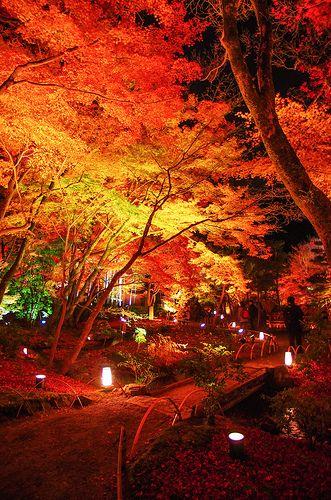 夜桜ならぬ夜紅葉。