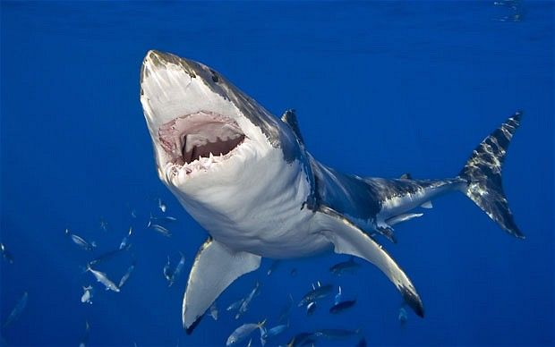 Great White Shark Attacks On Humans | Shark attack at South Africa's deadliest beach