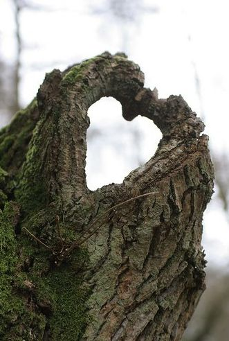 Get outside and keep your eyes peeled, it's all around us! Happy Valentines Day!