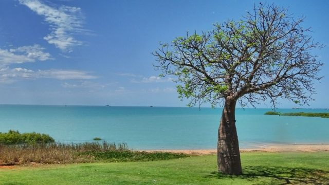 baobab in broome