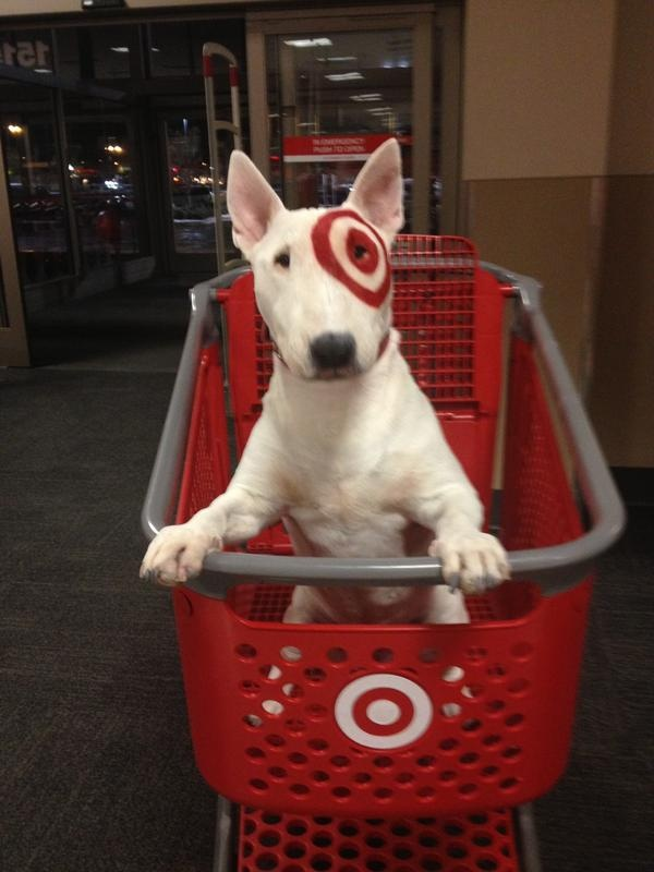 Ficou engra ado own bullterrier funny salveanimais What kind of dog is the target mascot