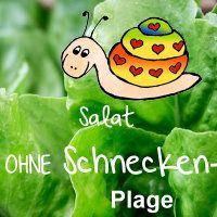 Salat pflanzen - garantiert schneckenfrei !!