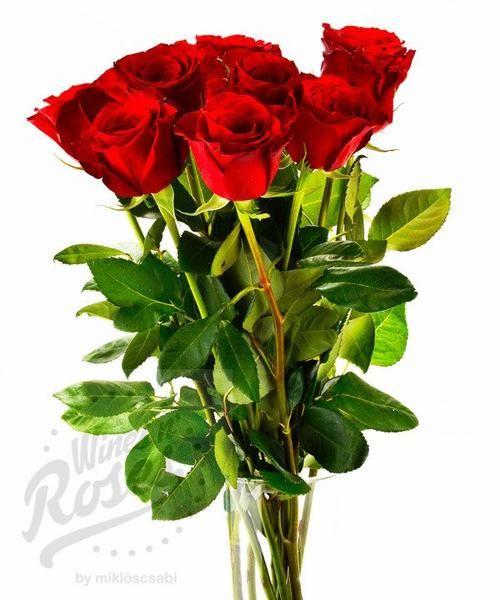Mrs. Valentin - Valentin napi csomagajánlatunk Hölgyek részére (kattints a képre!)