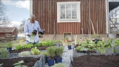 Ernst Kirchsteiger gör en kryddträdgård