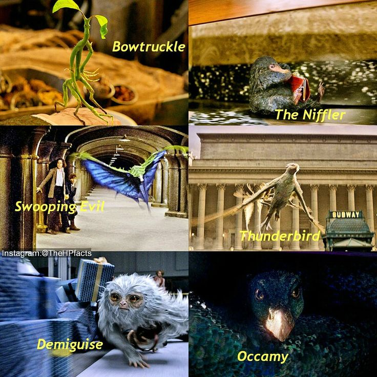 "HARRY POTTER FACTS on Twitter: ""Some of the characters of Harry Potter and what…"