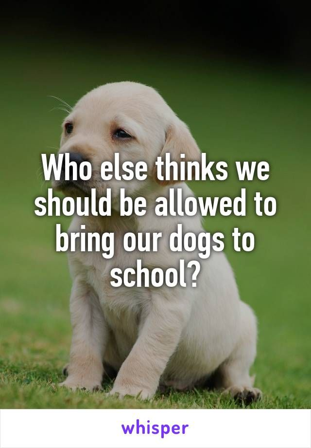 Who else thinks we should be allowed to bring our dogs to school?