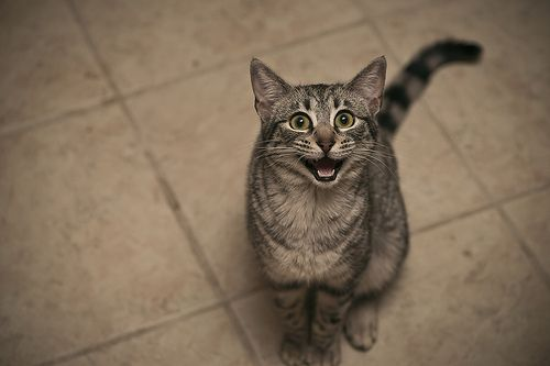 Overly Excited CatOverly Excited Cat