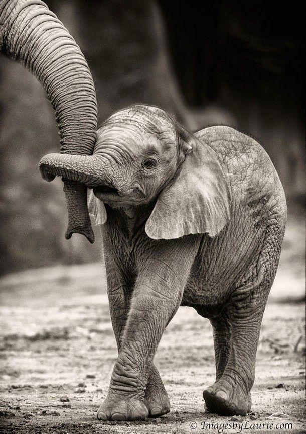 25 bezaubernde Fotos, die die Liebe der Eltern im Tierreich widerspiegeln   – Autres animaux