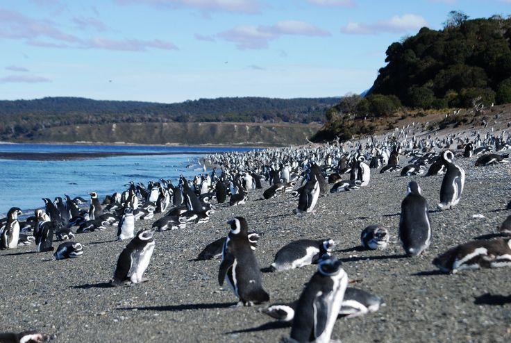terra del fuego, patagonia