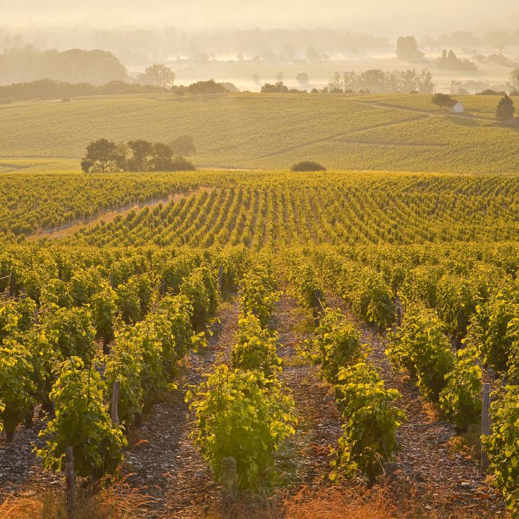 The Best Deals in Wine Country Travel (September 2015)