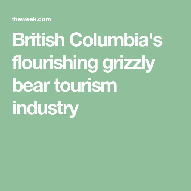 British Columbia's flourishing grizzly bear tourism industry