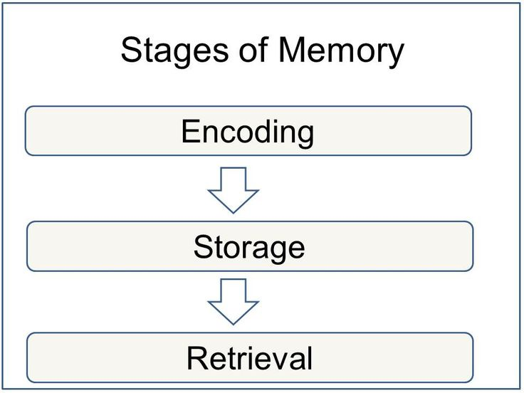 experiment of long term memory retention How to maximise your memory the greater the likelihood of long-term retention another experiment involved participants learning sentences either by.