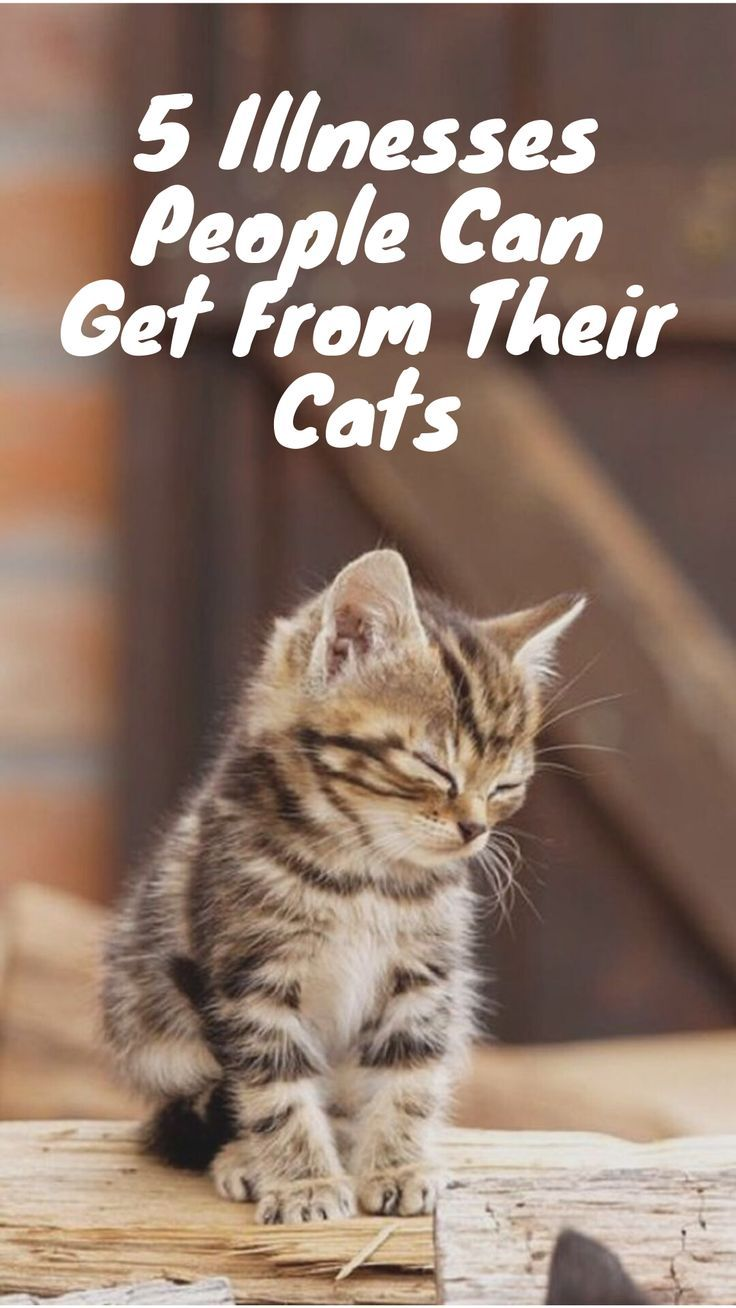 The Following Is Not The Full Listing Of Every Illness Or Parasite Which Is Capable Of Passing From Felines To People However The Cat Illnesses Cats Pet Mama