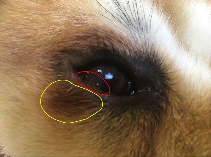 Entropium Beim Hund In Schweinfurt Gestern Operiert Tiere